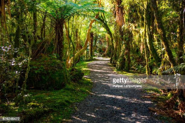 Track to Roaring Billy Falls, Mt Aspiring National Park, New Zealand
