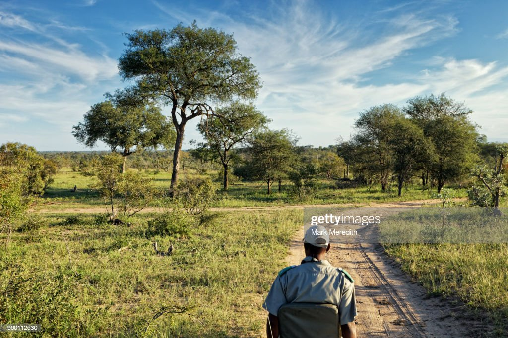 Tracker on the end of a safari vehicle in Klaserie Reserve, Greater Kruger National Park : Stock-Foto