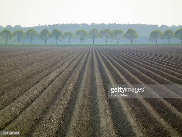 tracks in potato field - frans sellies stockfoto's en -beelden