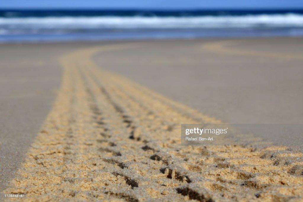 4WD tracks on a beach : Stock Photo