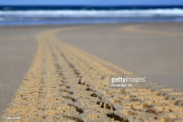 4WD tracks on a beach