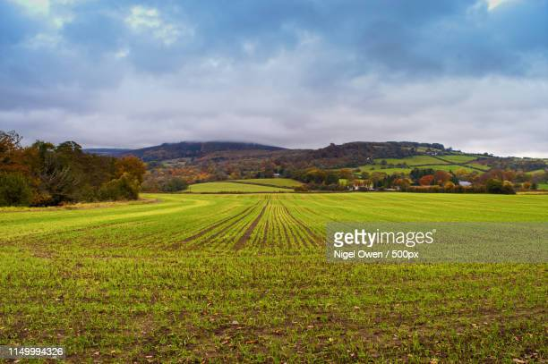 tracks - nigel owen stock pictures, royalty-free photos & images