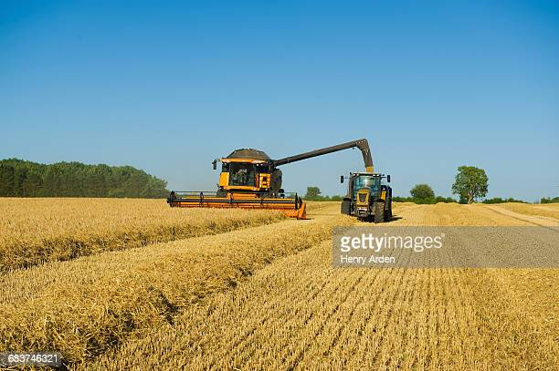 Tractor and combine harvester harvesting wheat field