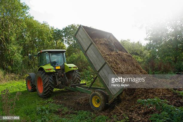 Tractor and trailer tipping manure in field