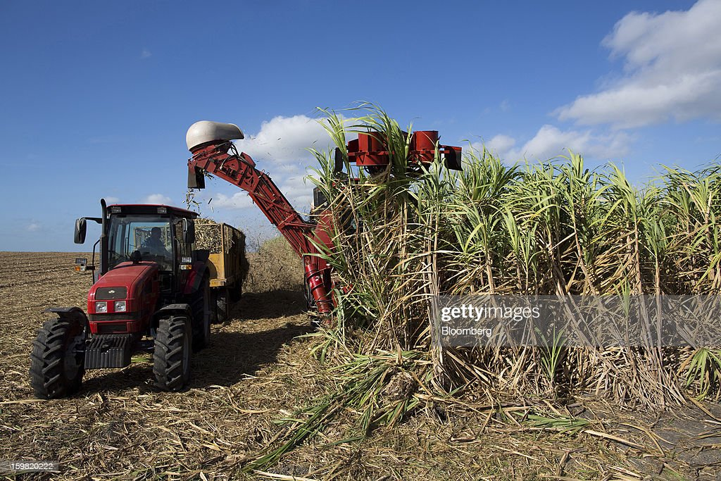 A tractor collects freshly-cut cane from a harvesting machine in a field near Jatibonico, Cuba, on Sunday, Jan. 13, 2013. Sugar prices fell 16 percent last year as global supplies are forecast to outpace demand for a third year in 2012-13, according to the London-based International Sugar Organization. Photographer: Andrey Rudakov/Bloomberg via Getty Images