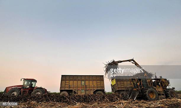 A tractor collects sugar cane to be transported to the refinery on March 18 2009 in Candelaria department of Valle del Cauca Colombia The Mayaguez...