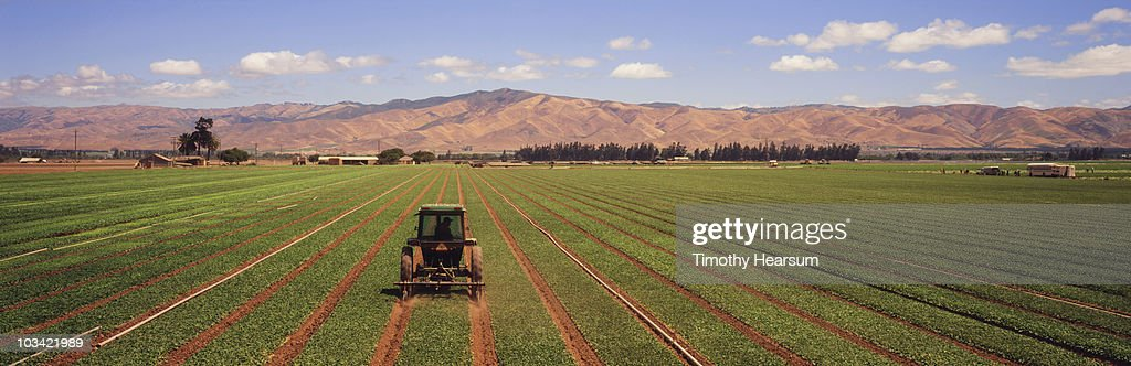Tractor cultivating between wide rows of spinach : Stock Photo