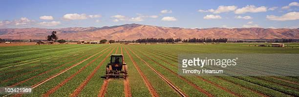 tractor cultivating between wide rows of spinach - timothy hearsum bildbanksfoton och bilder
