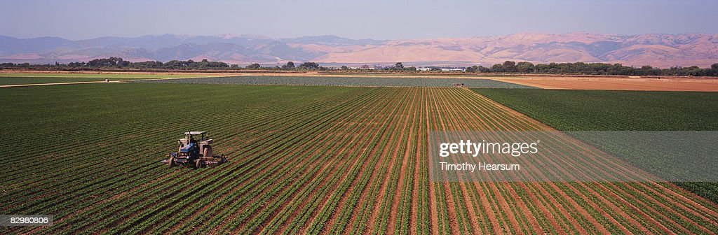 Tractor cultivating rows of beans : Stock Photo