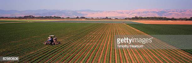 Tractor cultivating rows of beans