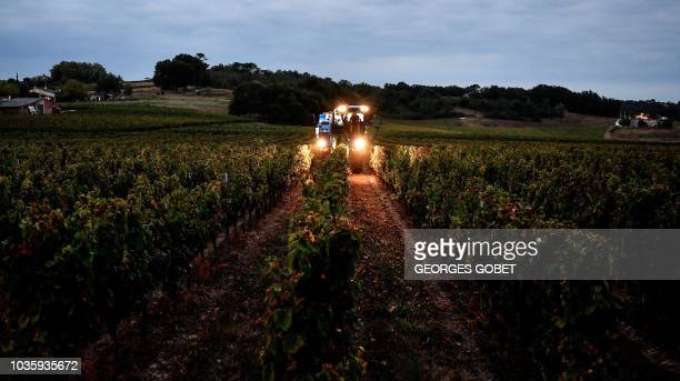 A tractor harvest the Chateau de Viens' wineyard early on September 19 2018 in Montbrier in the Cotes de Bourg appelation near Bordeaux