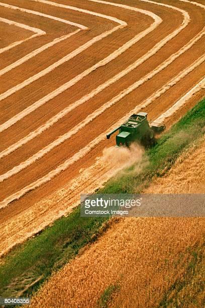 Tractor harvesting grain