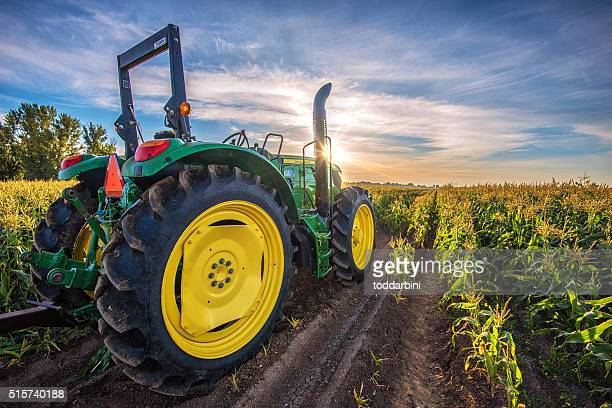 tractor in a corn field at sunrise - tractor stock pictures, royalty-free photos & images