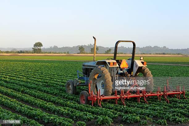 トラクター、野菜のフィールド