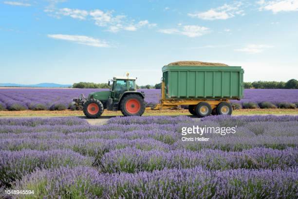 tractor & lavender fields valensole plateau provence - alpes de haute provence stock pictures, royalty-free photos & images