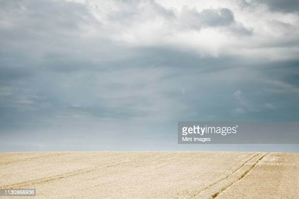 tractor lines in wheat field - overcast stock pictures, royalty-free photos & images