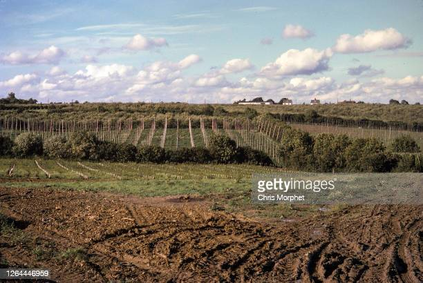 Tractor mud tracks and harvested hop fields on a farm near Cranbrook in Kent, United Kingdom, September 1970.