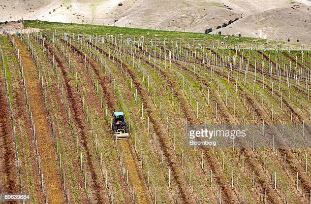 A tractor mulches dead wood as part of the winter pruning process at one of winemaker Villa Maria Estate Ltd's vineyards in Marlborough New Zealand...