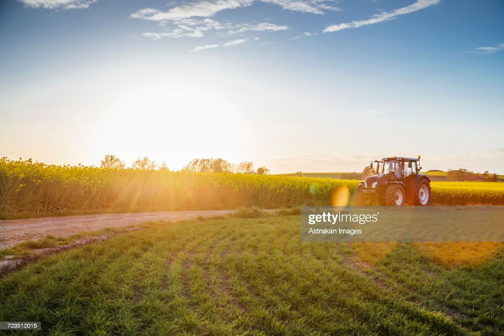 Tractor on dirt road amidst field during sunset : Stockfoto