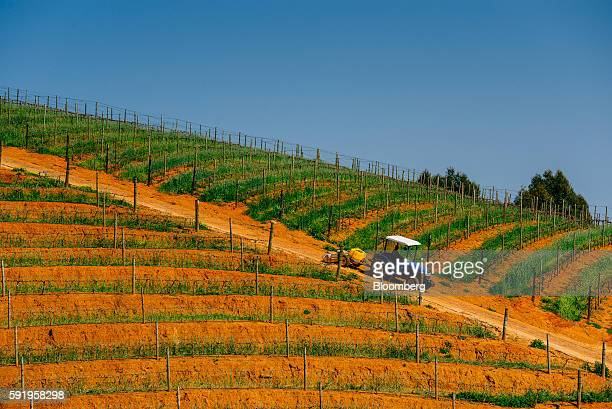 A tractor passes vineyards on the slopes of the Botmaskop mountain peak at the Delaire Graff Estate in Stellenbosch South Africa on Thursday Aug 18...
