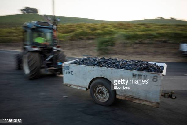 A tractor pulls a bin filled with zinfandel grapes at a vineyard in Kenwood California US on Monday Sept 21 2020 Smoke from the LNU Lightning Complex...