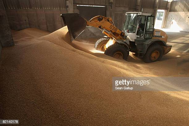 A tractor pushes freshlyharvested wheat into a pile at a storage hall at a largescale commercial farm near Berlin July 31 2008 in Juehnsdorf Germany...