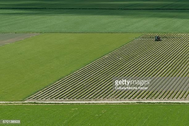 tractor spraying a field with pesticide - biddingshuizen stockfoto's en -beelden