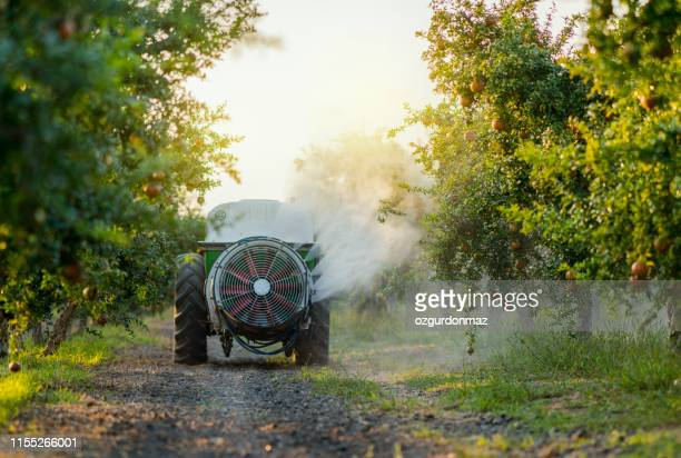 tractor spraying insecticide or fungicide on pomegranate trees in garden - insecticide stock pictures, royalty-free photos & images
