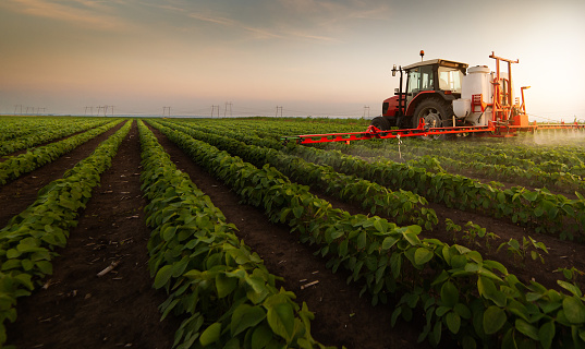Tractor spraying pesticides on soybean field  with sprayer at spring 1181859042