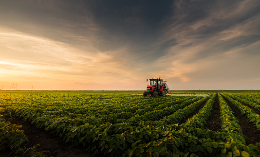 Tractor spraying pesticides on soybean field with sprayer at spring 966855552