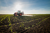 Tractor spraying young corn with pesticides