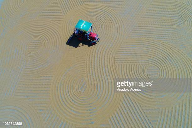 A tractor spreads bulgur wheat on a field with conventional techniques for drying under the sun in Gaziantep which is the member of UNESCO Creative...