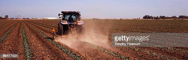 tractor tilling and fertilizing young cucumbers - timothy hearsum stock pictures, royalty-free photos & images