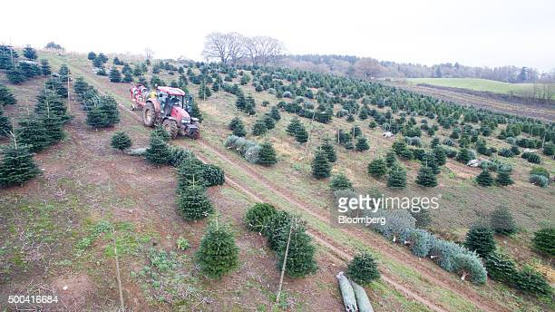 A tractor with a netting machine sits in a field at Santa Fir Christmas Tree Farm near Guildford UK on Monday Dec 7 2015 With inflation stagnant and...