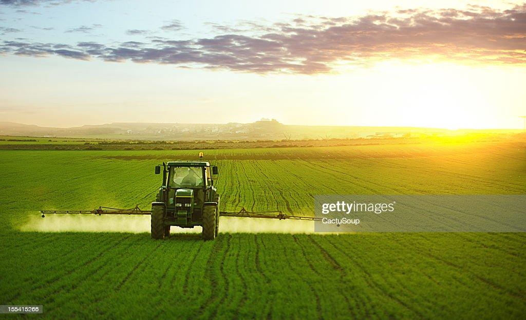 Tractor en el campo de trigo de trabajo : Foto de stock