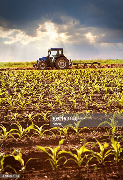 tractor working on the field in sunlight - tractor stock pictures, royalty-free photos & images