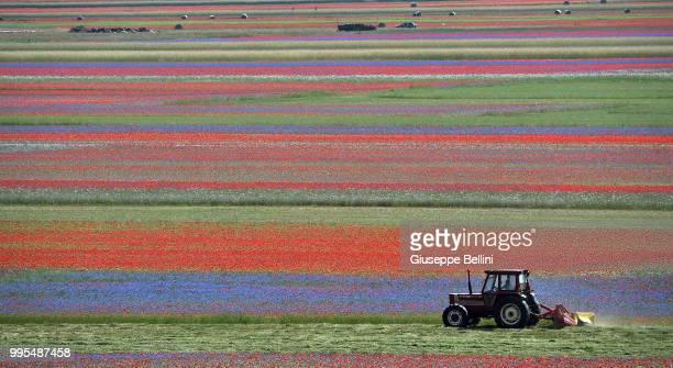 Tractor works in a field during the annual blossom in Castelluccio on July 10, 2018 in Castelluccio di Norcia near Perugia, Italy.