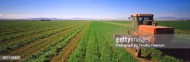 tractors cutting alfalfa - timothy hearsum stock pictures, royalty-free photos & images