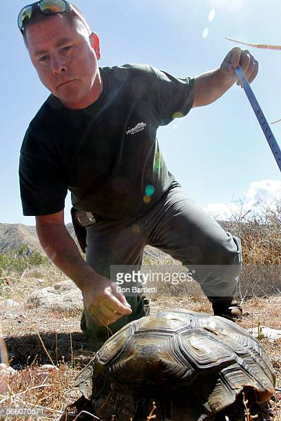 COUNTY CA Tracy Philippi takes a close look at a desert tortoise soaking up the sun in Whitewater Canyon near Palm Springs CA He noted in his...