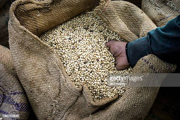 A trader inspects soybeans in a gunny sack at a grain market in Burhanpur Madhya Pradesh India on Thursday Oct 24 2013 Indias soybean output...