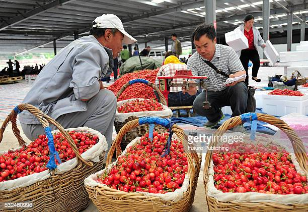 A trader seen reading the weight of a basket of cherries in a wholesale market on May 19 2016 in Yantai China Feature China / Barcroft Images...