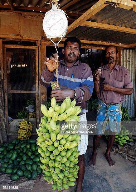 A trader weighs bananas in the bustling Kilinochchi market 19 June 2005 The rebelheld area has turned into a bustling hive of activity following a...