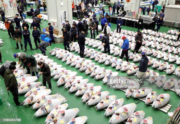 Traders at the year's first tuna auction at the Toyosu fish market on January 05 2019 in Tokyo Japan The 278kilogram tuna caught off Oma Aomori...