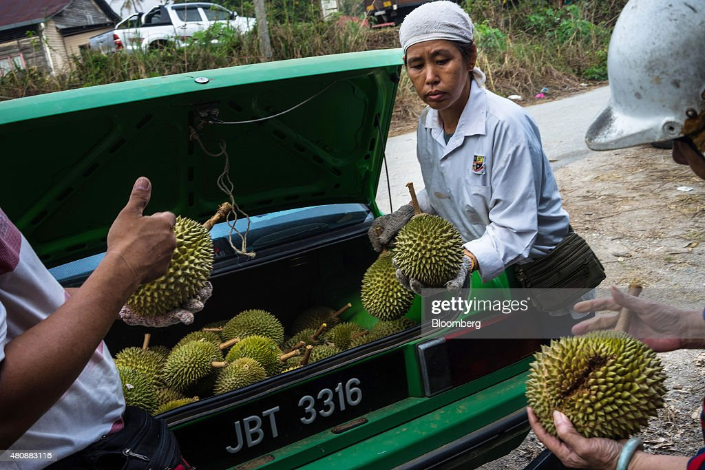 Southeast Asia's King Of Fruits Durian From Harvest To Retail : News Photo
