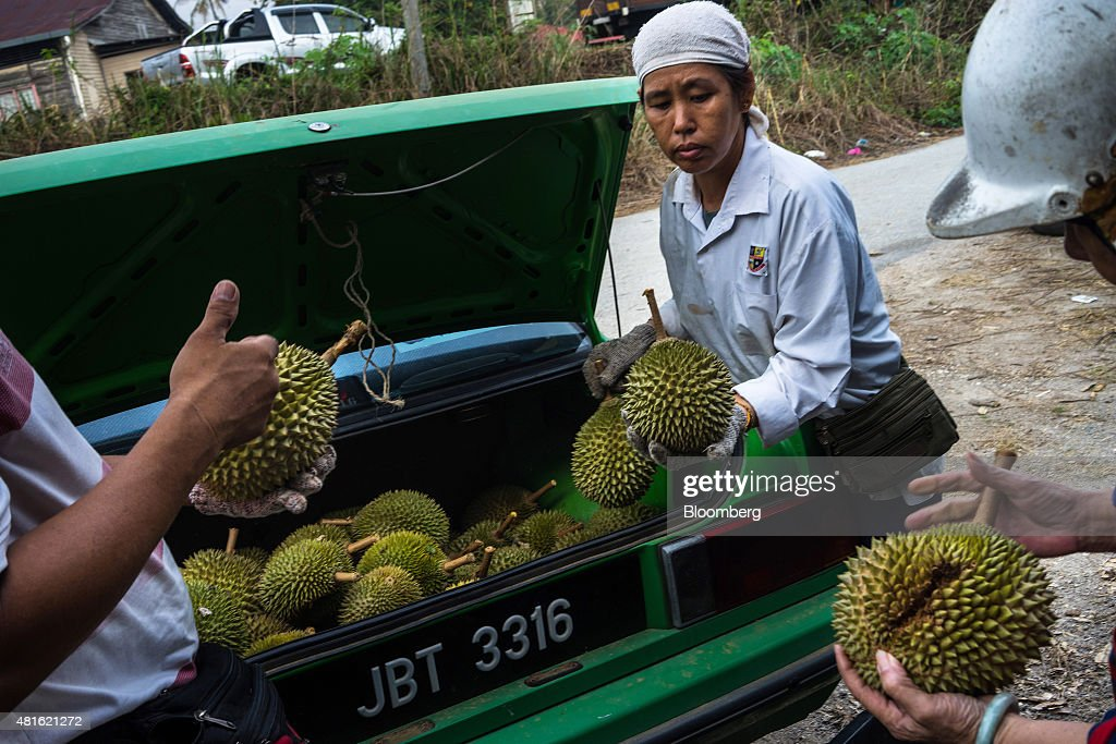 Traders inspect durians as a farmer unloads the fruit from the back of a vehicle at a road side stall in Titi, Negeri Sembilan, Malaysia, on Monday, July 13, 2015. The Southeast Asian native fruit -- known for its sweet, custardy flesh and banned from Singapore's subways and hotels because of its pungent odor -- can retail for more than S$40 ($30) apiece in Singapore. Photographer: Sanjit Das/Bloomberg via Getty Images