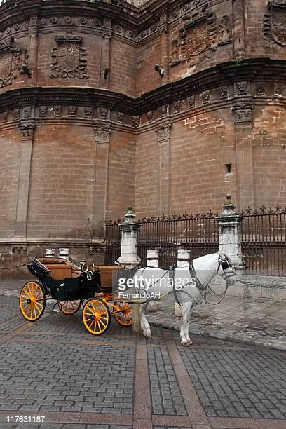 伝統的なアンダルシア馬