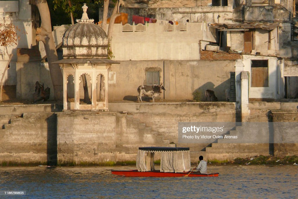 Traditional boat on lake Pichola and a holy cow in the empty ghats at sunset in Udaipur, Rajasthan, India : Foto de stock