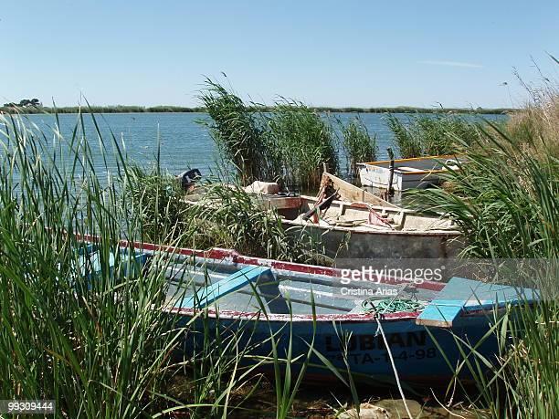 Traditional boats in the Ebro river mouth Ebro Delta Natural Park Tarragona Cataluna Spain may 2007