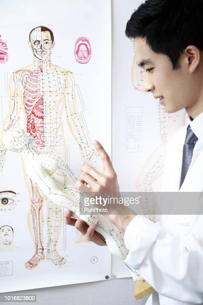 Traditional chinese physician  applying needles on acupuncture model