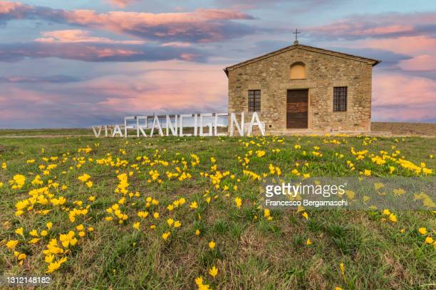 traditional church of scala in the flowering field of val d'orcia with written(via francigena trail). - italia stockfoto's en -beelden